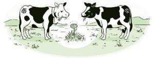 cow comic